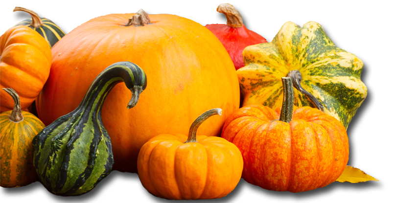 Assorted-Pumpkins-Banner-2