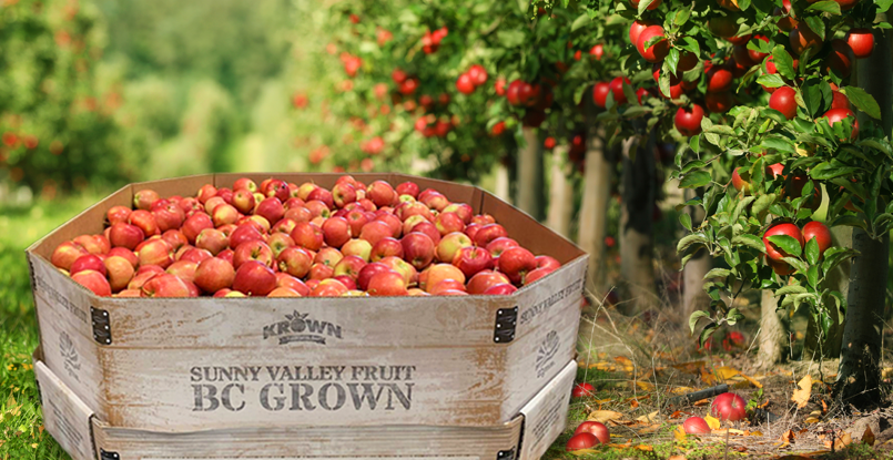 BC-Apples-in-Season-Banner